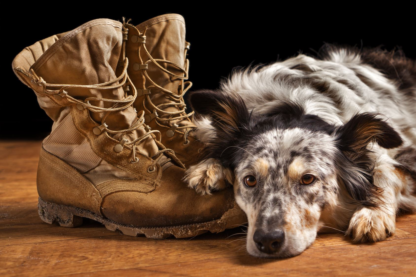 Military Boots and Dog